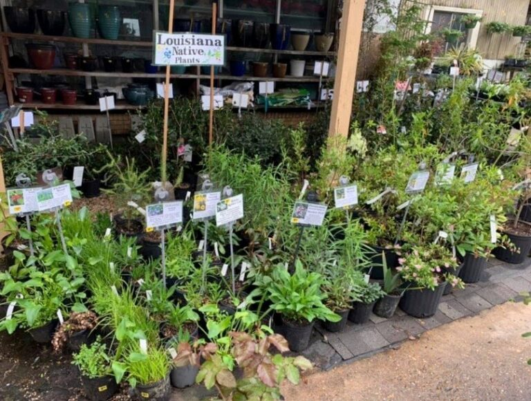 Native Plants Now Available at Rose Garden Center