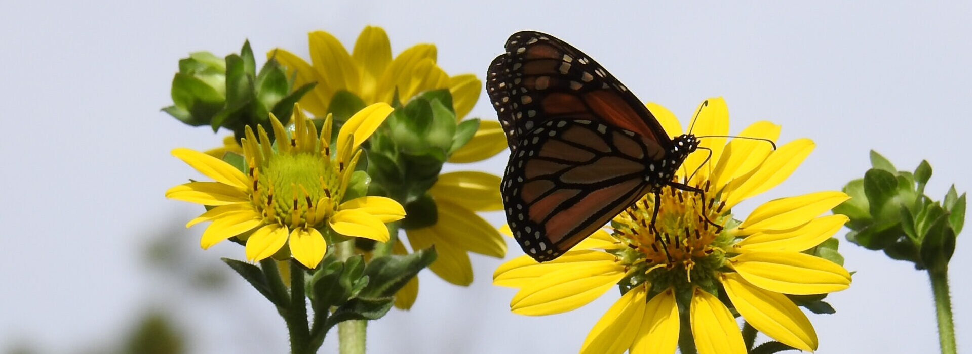 Native Plant Initiative of Greater New Orleans